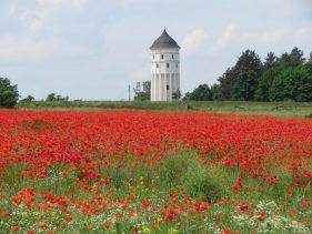 Der Wachbergturm im Sommer